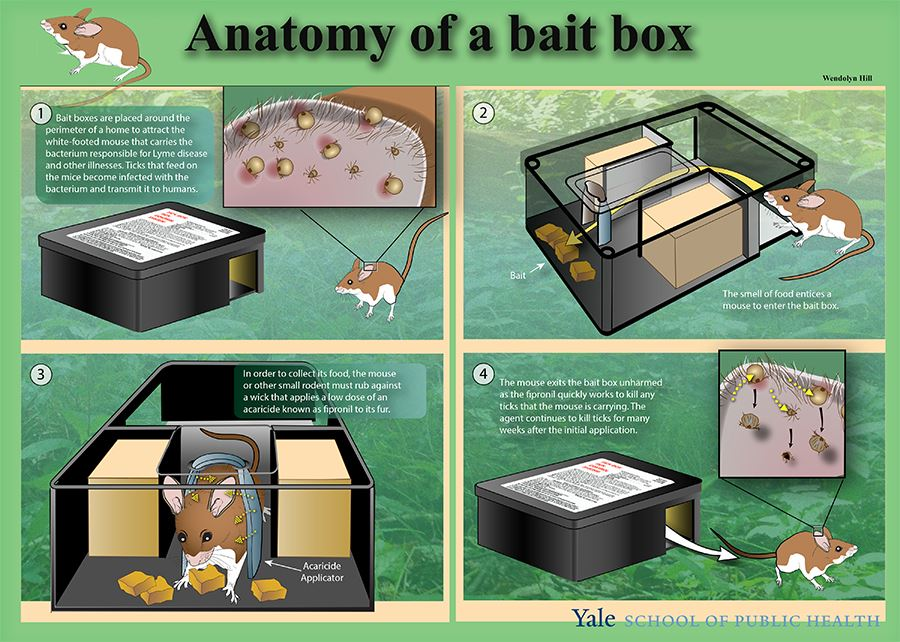 anatomy of a bait box
